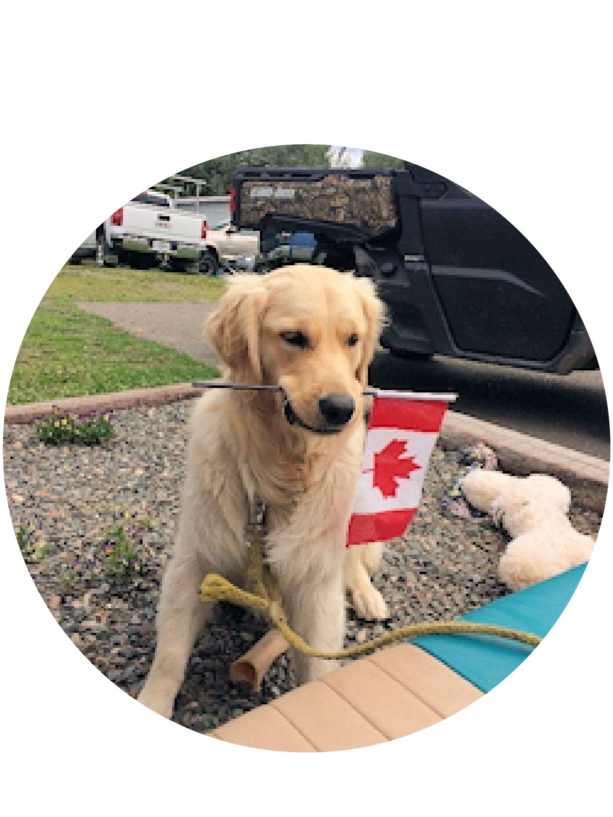 good-dog-holding-canadian-flag.png